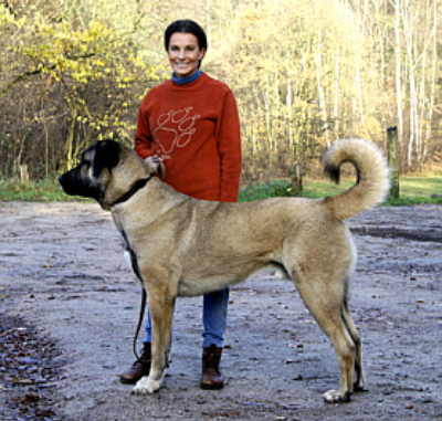 HexenWald Kangal Male